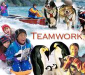 teamwork-nd