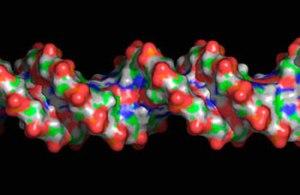 Việc giải mã bộ gene người giúp các nhà khoa học lý giải được nguyên nhân của nhiều căn bệnh.